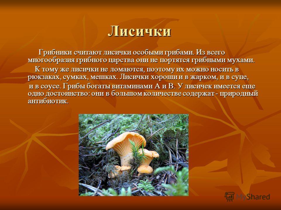 Лисички Грибники считают лисички особыми грибами. Из всего многообразия грибного царства они не портятся грибными мухами. Грибники считают лисички особыми грибами. Из всего многообразия грибного царства они не портятся грибными мухами. К тому же лиси