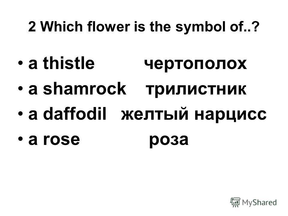 2 Which flower is the symbol of..? a thistle чертополох a shamrock трилистник a daffodil желтый нарцисс a rose роза