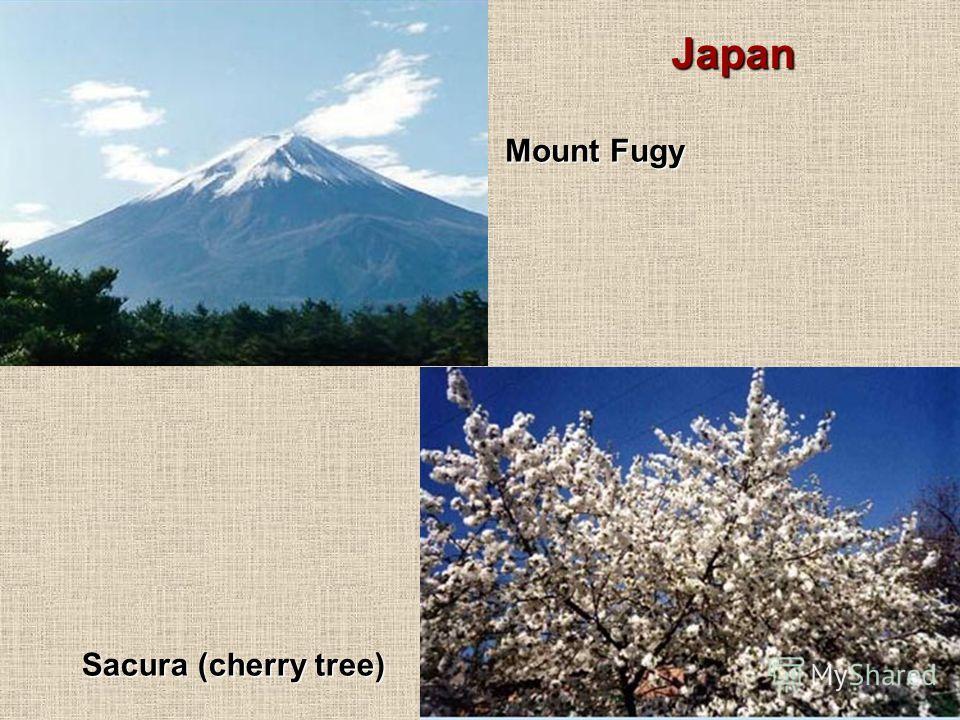 Mount Fugy Sacura (cherry tree) Japan