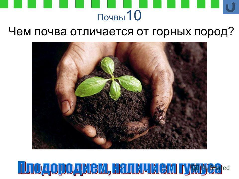 Почвы 10 Чем почва отличается от горных пород?
