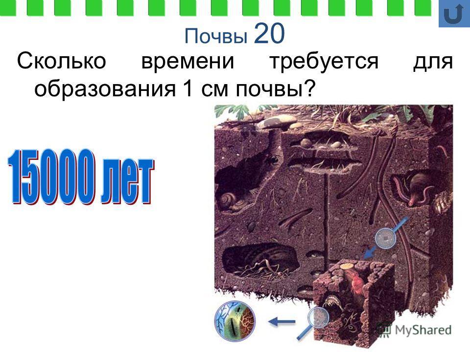 Почвы 20 Сколько времени требуется для образования 1 см почвы?