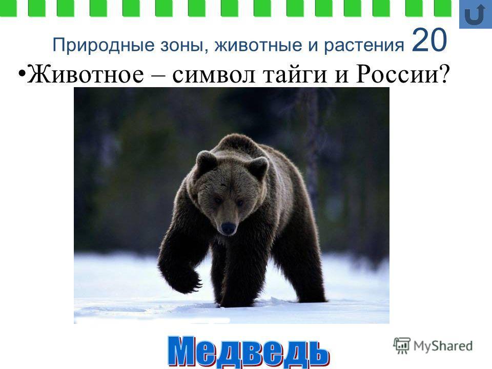 Природные зоны, животные и растения 20 Животное – символ тайги и России?