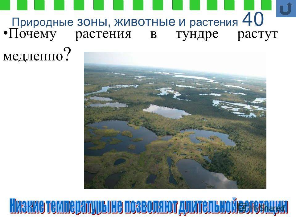 Природные зоны, животные и растения 40 Почему растения в тундре растут медленно ?