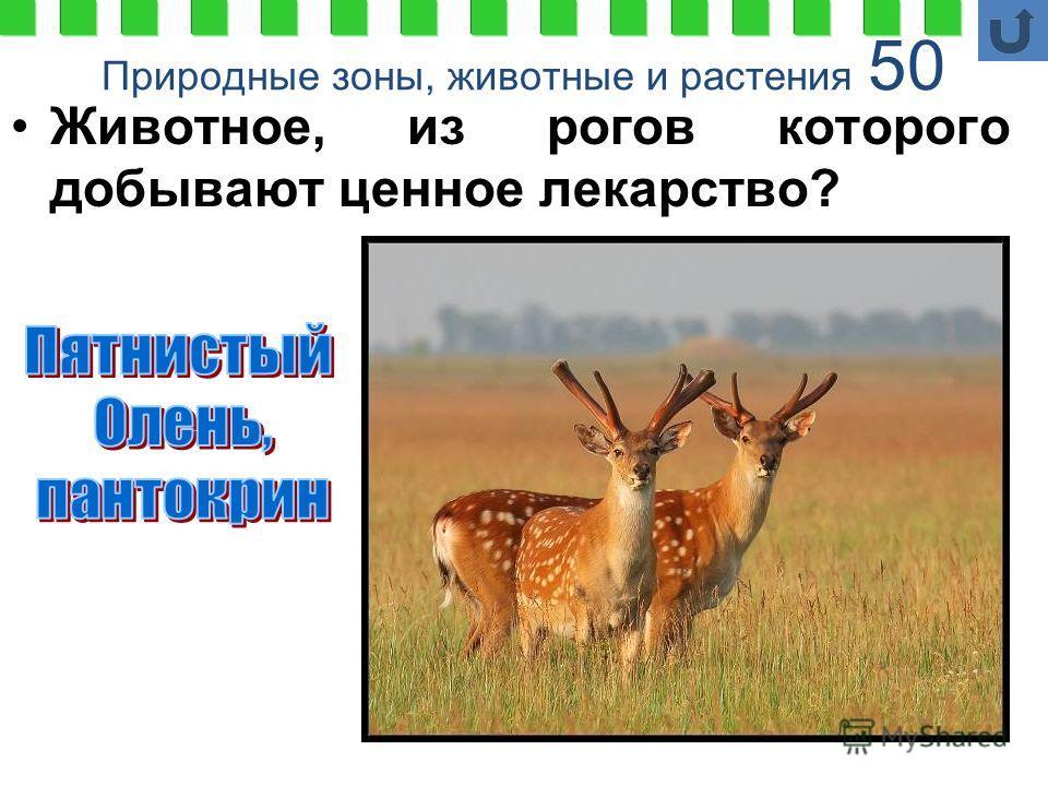 Природные зоны, животные и растения 50 Животное, из рогов которого добывают ценное лекарство?