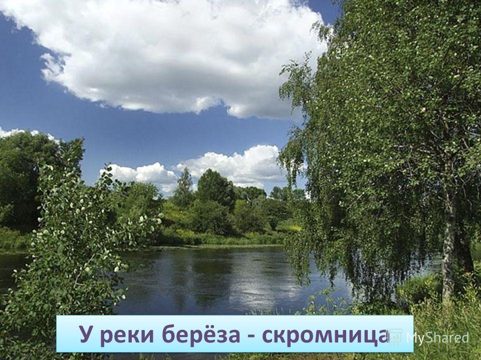 У реки берёза - скромница