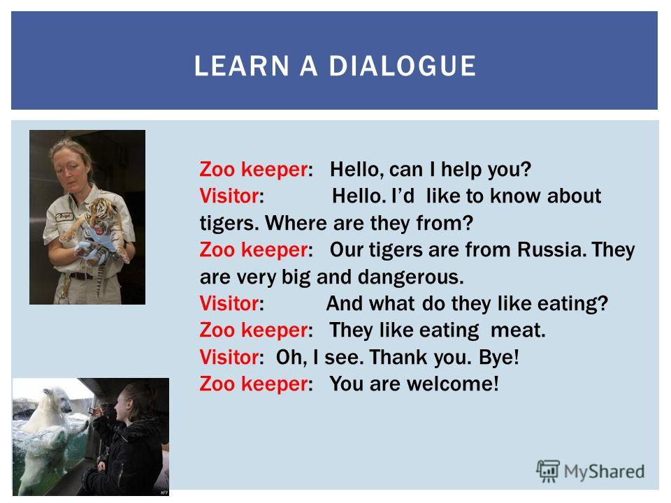 LEARN A DIALOGUE Zoo keeper: Hello, can I help you? Visitor: Hello. Id like to know about tigers. Where are they from? Zoo keeper: Our tigers are from Russia. They are very big and dangerous. Visitor: And what do they like eating? Zoo keeper: They li