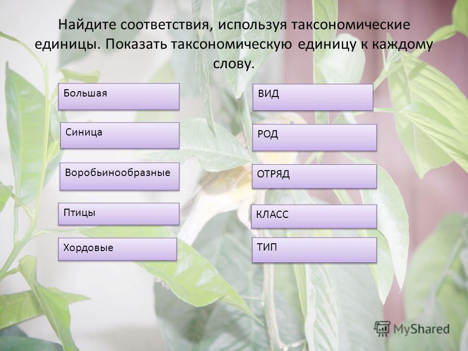 Найдите соответствия, используя таксономические единицы. Показать таксономическую единицу к каждому слову.