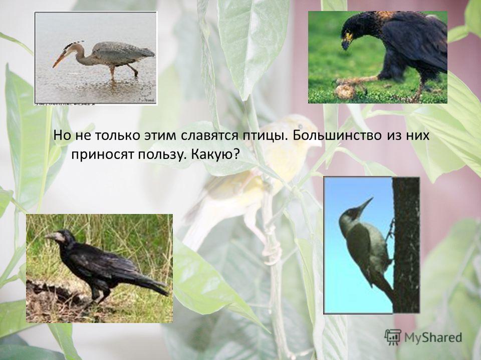Но не только этим славятся птицы. Большинство из них приносят пользу. Какую?