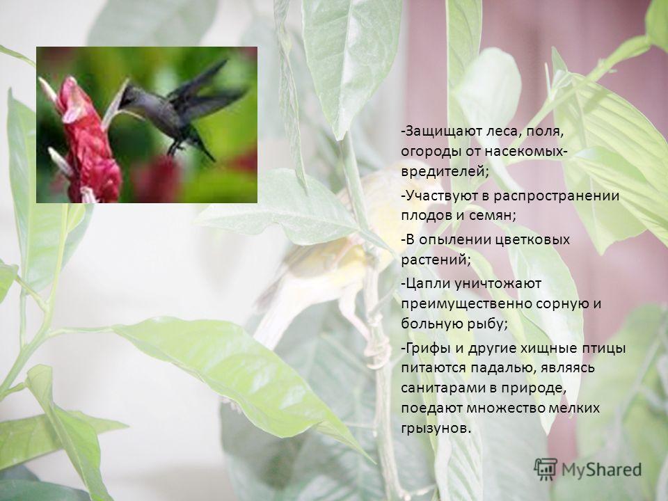 -Защищают леса, поля, огороды от насекомых- вредителей; -Участвуют в распространении плодов и семян; -В опылении цветковых растений; -Цапли уничтожают преимущественно сорную и больную рыбу; -Грифы и другие хищные птицы питаются падалью, являясь санит