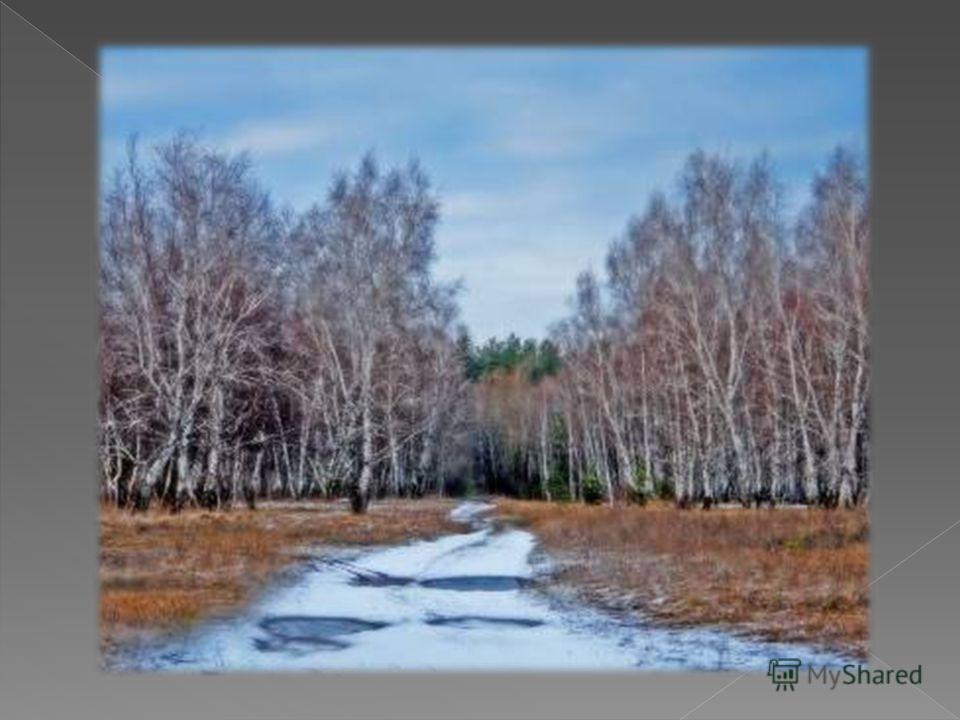 Ни вблизи, ни вдали Я не знаю земли Лучше той, что меня растила, Синих рек рукава, В небе синь–синева, И светла от берез Россия. И. Шаферан