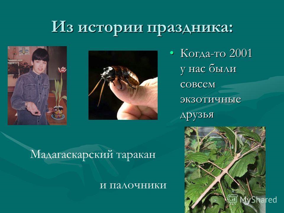 Из истории праздника: Когда-то 2001 у нас были совсем экзотичные друзья Мадагаскарский таракан и палочники