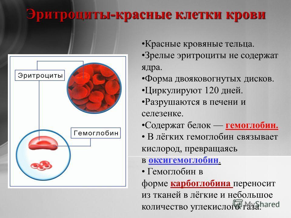 Эритроциты-красные клетки крови Красные кровяные тельца. Зрелые эритроциты не содержат ядра. Форма двояковогнутых дисков. Циркулируют 120 дней. Разрушаются в печени и селезенке. Содержат белок гемоглобин. В лёгких гемоглобин связывает кислород, превр