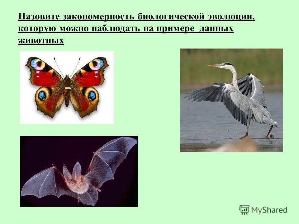 Назовите закономерность биологической эволюции, которую можно наблюдать на примере данных животных
