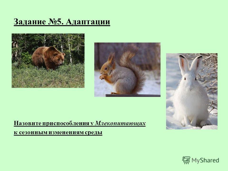 Задание 5. Адаптации Назовите приспособления у Млекопитающих к сезонным изменениям среды