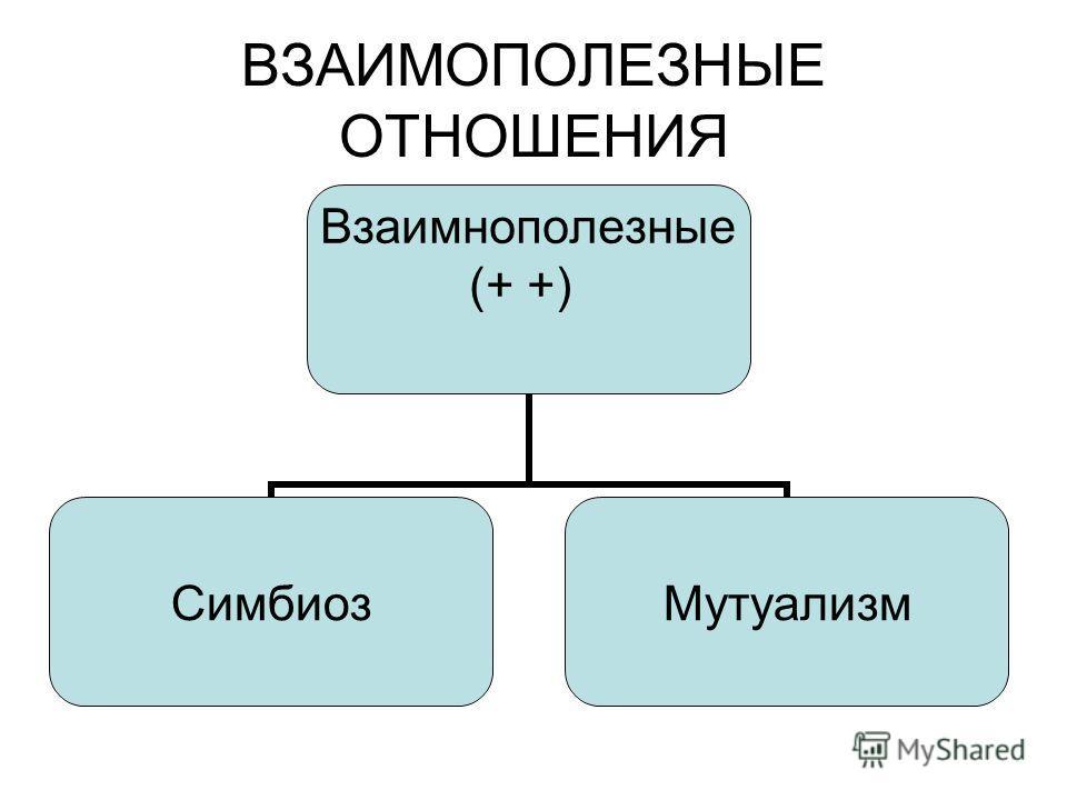 ВЗАИМОПОЛЕЗНЫЕ ОТНОШЕНИЯ Взаимнополезные (+ +) СимбиозМутуализм