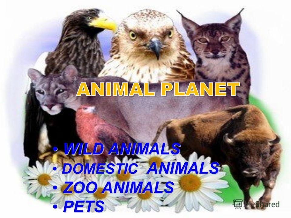 WILD ANIMALS WILD ANIMALS DOMESTIC ANIMALS DOMESTIC ANIMALS ZOO ANIMALS ZOO ANIMALS PETS PETS