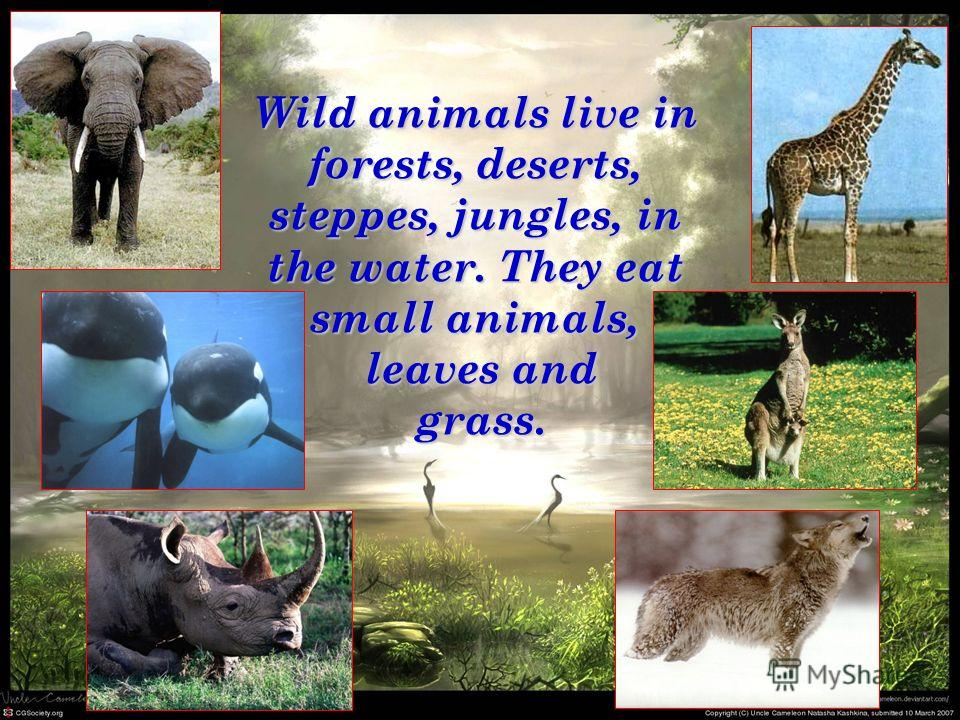 Wild animals live in forests, deserts, steppes, jungles, in the water. They eat small animals, leaves and leaves and grass. grass.