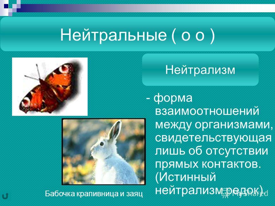 Нейтральные ( о о ) - форма взаимоотношений между организмами, свидетельствующая лишь об отсутствии прямых контактов. (Истинный нейтрализм редок). Нейтрализм Бабочка крапивница и заяц