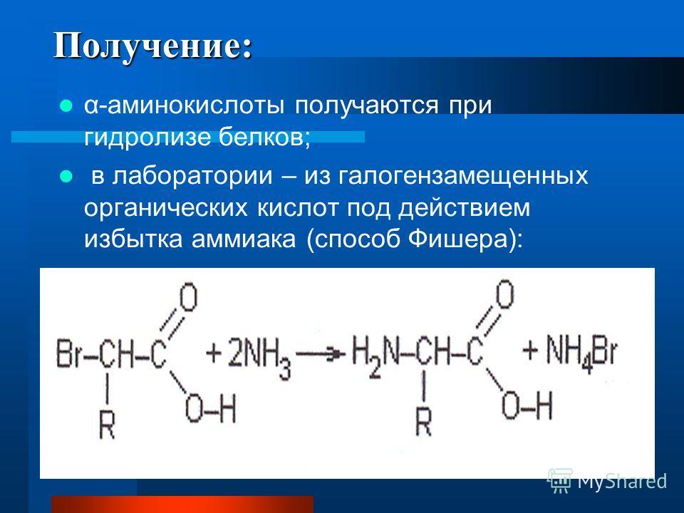 Получение: α-аминокислоты получаются при гидролизе белков; в лаборатории – из галогензамещенных органических кислот под действием избытка аммиака (способ Фишера):