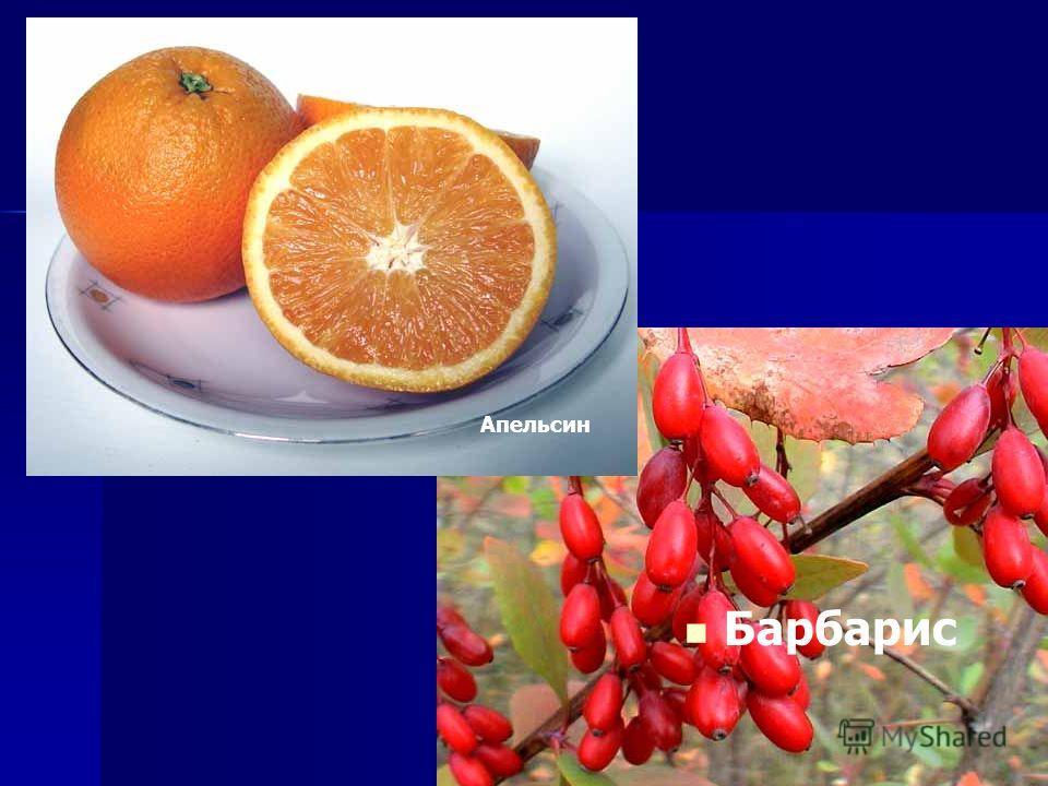 Барбарис Апельсин