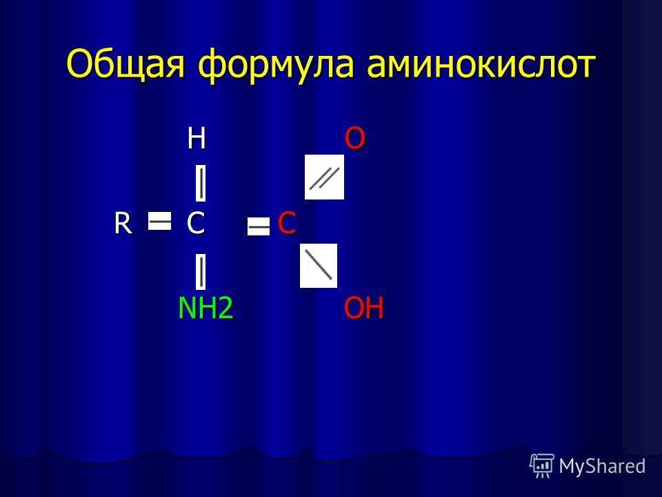 Общая формула аминокислот H H O O R C C N NH2 O OH