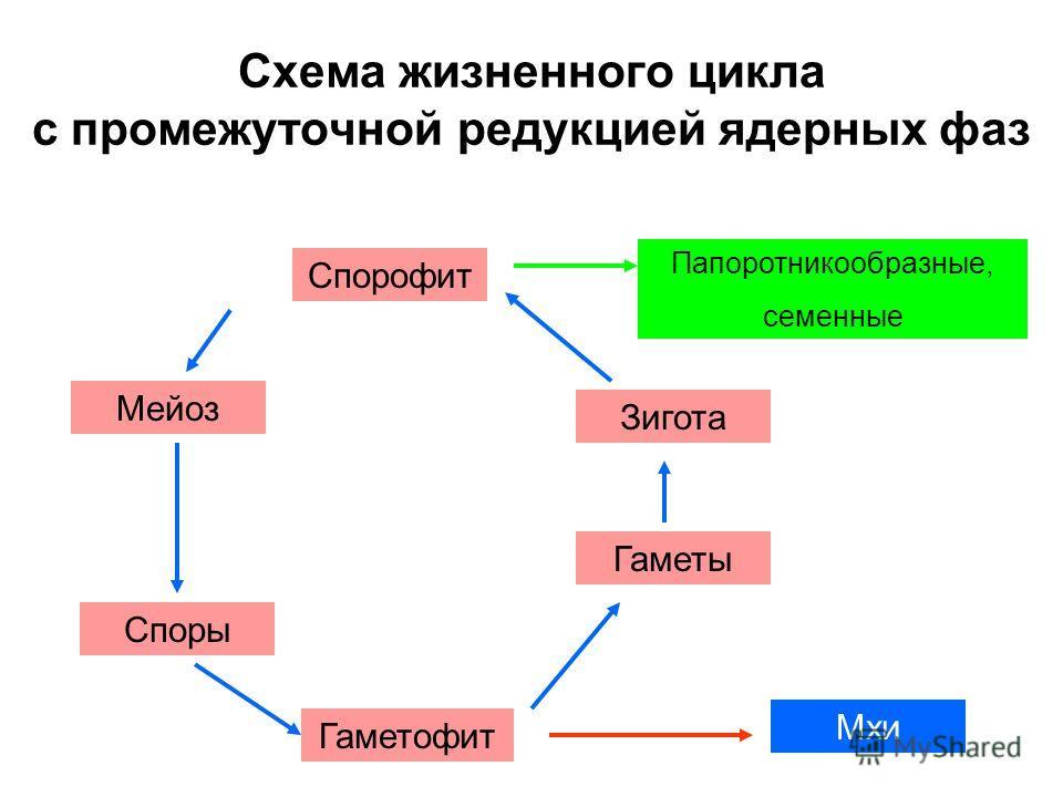 Схема жизненного цикла с