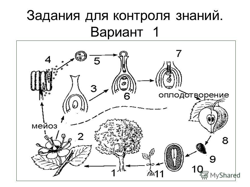 Задания для контроля знаний. Вариант 1
