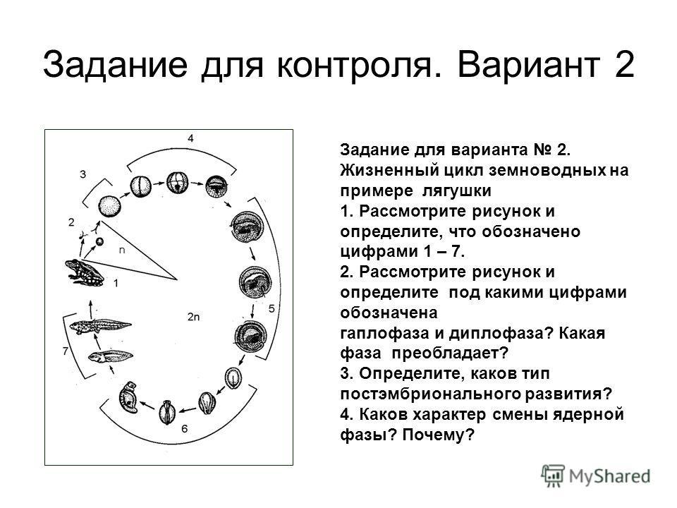 Задание для контроля. Вариант 2 Задание для варианта 2. Жизненный цикл земноводных на примере лягушки 1. Рассмотрите рисунок и определите, что обозначено цифрами 1 – 7. 2. Рассмотрите рисунок и определите под какими цифрами обозначена гаплофаза и дип