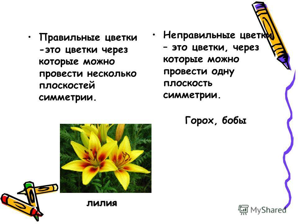Правильные цветки -это цветки через которые можно провести несколько плоскостей симметрии. Неправильные цветки – это цветки, через которые можно провести одну плоскость симметрии. лилия Горох, бобы
