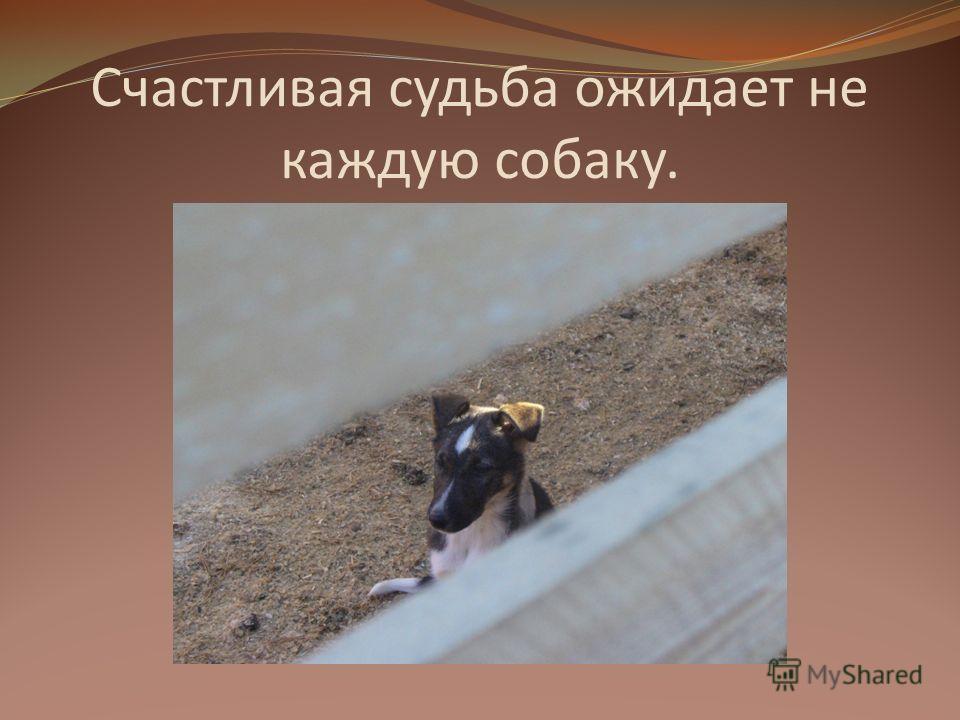 Счастливая судьба ожидает не каждую собаку.