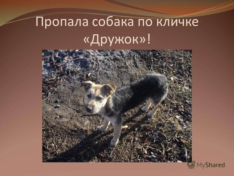 Пропала собака по кличке «Дружок»!