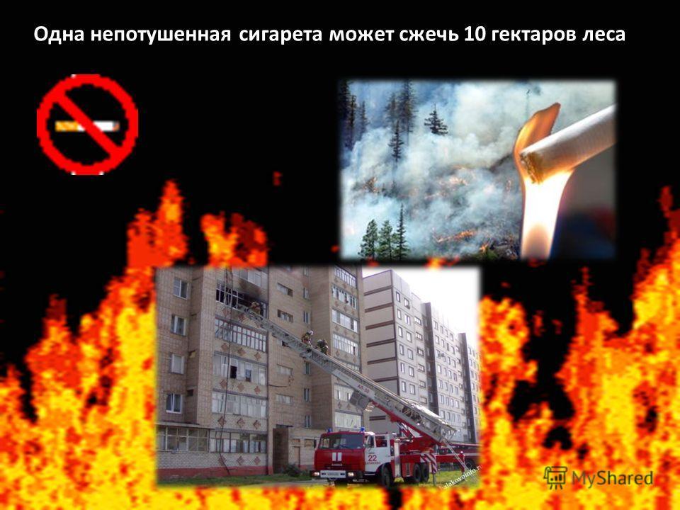 Одна непотушенная сигарета может сжечь 10 гектаров леса