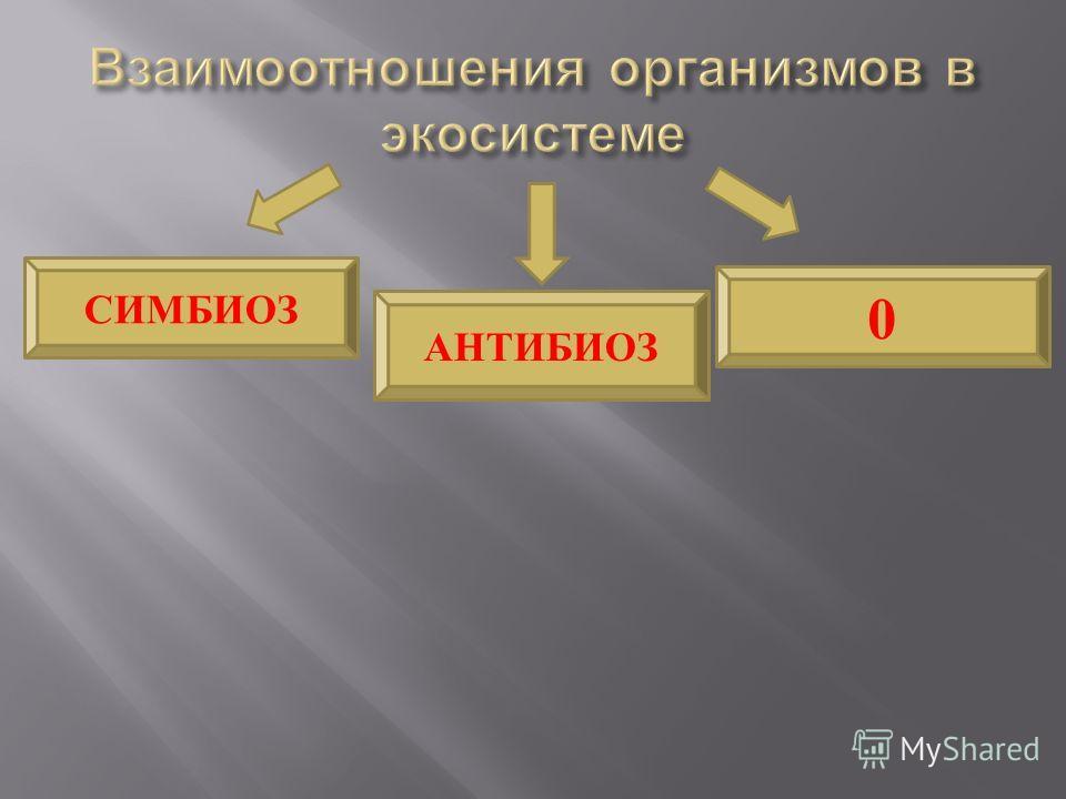 АНТИБИОЗ 0