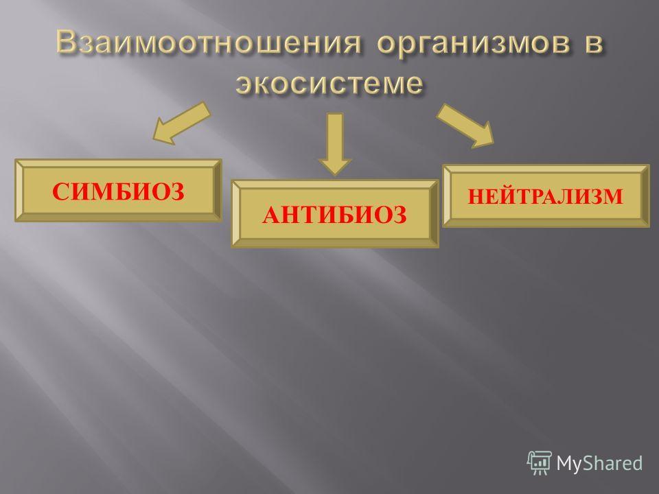 СИМБИОЗ АНТИБИОЗ НЕЙТРАЛИЗМ