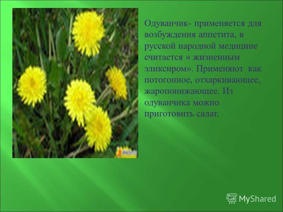 Одуванчик - применяется для возбуждения аппетита, в русской народной медицине считается « жизненным эликсиром ». Применяют как потогонное, отхаркивающее, жаропонижающее. Из одуванчика можно приготовить салат.