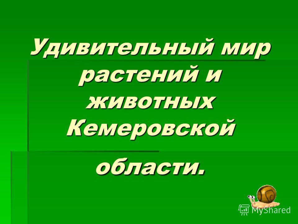 Удивительный мир растений и животных Кемеровской области.