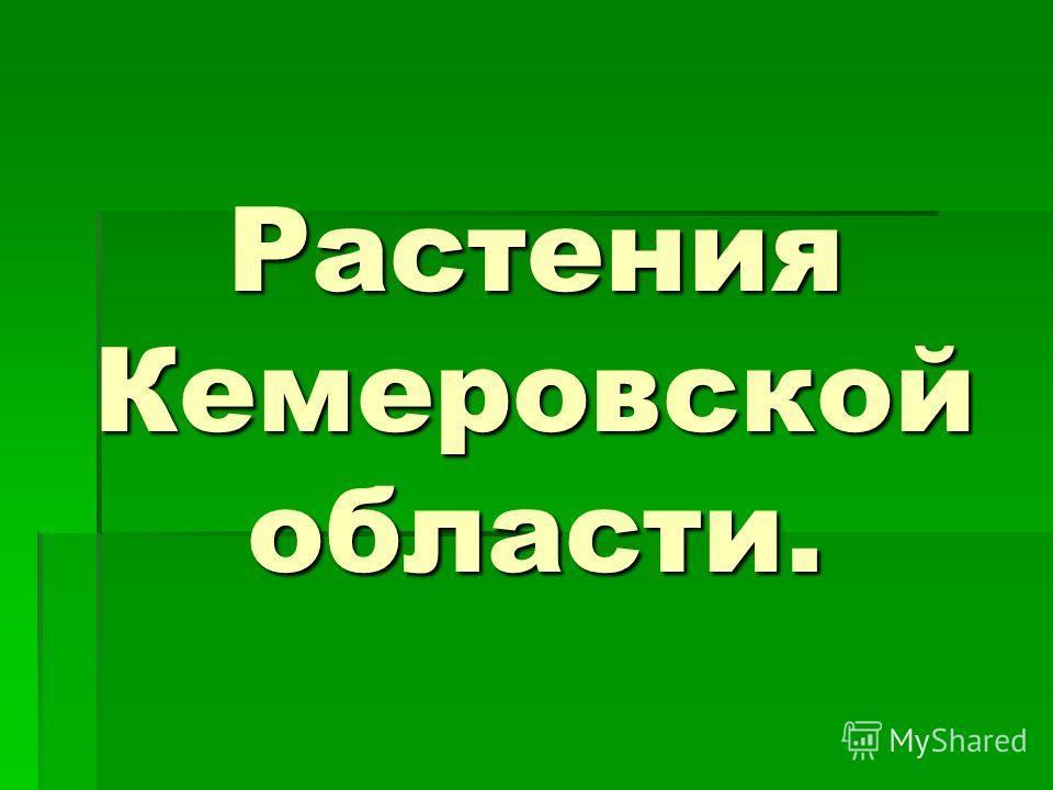 Растения Кемеровской области.