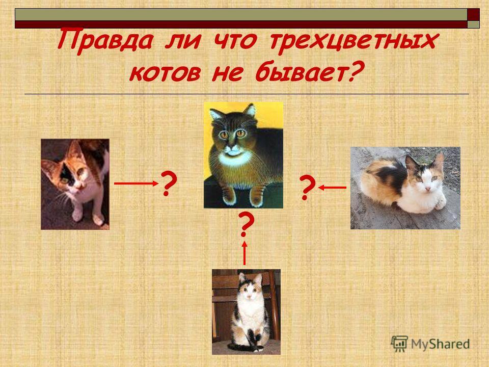 Правда ли что трехцветных котов не бывает? ? ? ?
