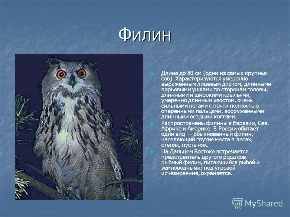 Филин Длина до 80 см (одни из самых крупных сов). Характеризуются умеренно выраженным лицевым диском, длинными перьевыми ушками по сторонам головы, длинными и широкими крыльями, умеренно длинным хвостом, очень сильными ногами с почти полностью оперен