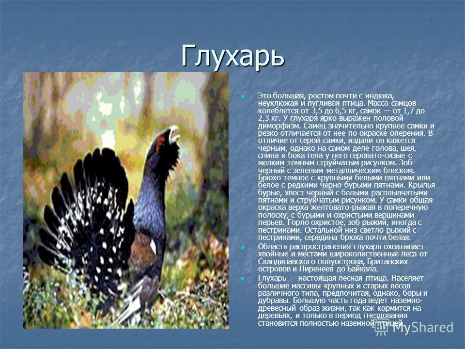 Глухарь Это большая, ростом почти с индюка, неуклюжая и пугливая птица. Масса самцов колеблется от 3,5 до 6,5 кг, самок от 1,7 до 2,3 кг. У глухаря ярко выражен половой диморфизм. Самец значительно крупнее самки и резко отличается от нее по окраске о