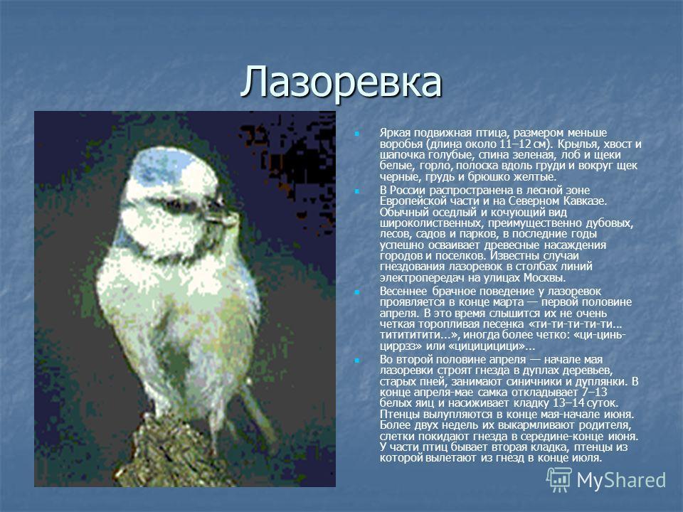 Лазоревка Яркая подвижная птица, размером меньше воробья (длина около 11–12 см). Крылья, хвост и шапочка голубые, спина зеленая, лоб и щеки белые, горло, полоска вдоль груди и вокруг щек черные, грудь и брюшко желтые. В России распространена в лесной