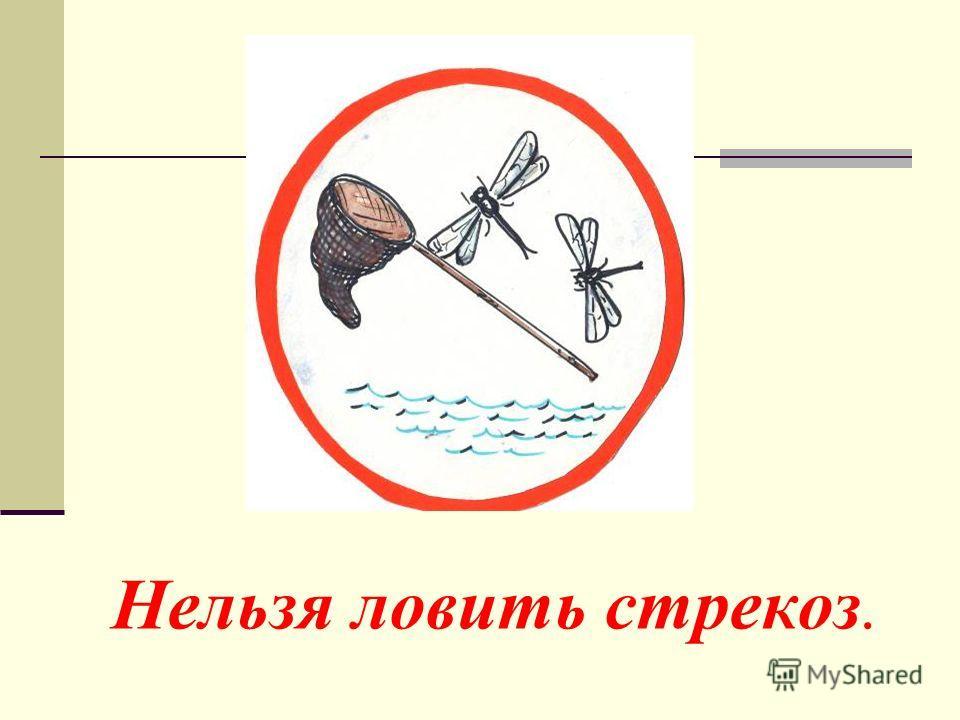 Нельзя ловить стрекоз.