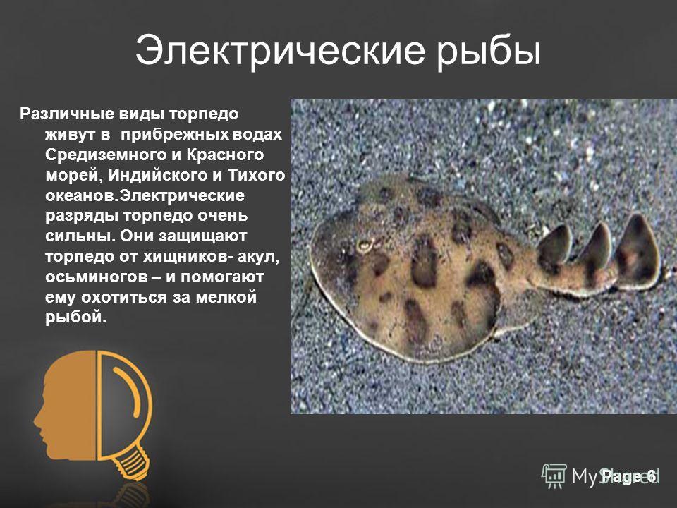 Free Powerpoint TemplatesPage 6 Электрические рыбы Различные виды торпедо живут в прибрежных водах Средиземного и Красного морей, Индийского и Тихого океанов.Электрические разряды торпедо очень сильны. Они защищают торпедо от хищников- акул, осьминог
