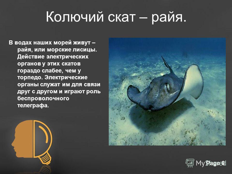 Free Powerpoint TemplatesPage 8 Колючий скат – райя. В водах наших морей живут – райя, или морские лисицы. Действие электрических органов у этих скатов гораздо слабее, чем у торпедо. Электрические органы служат им для связи друг с другом и играют рол