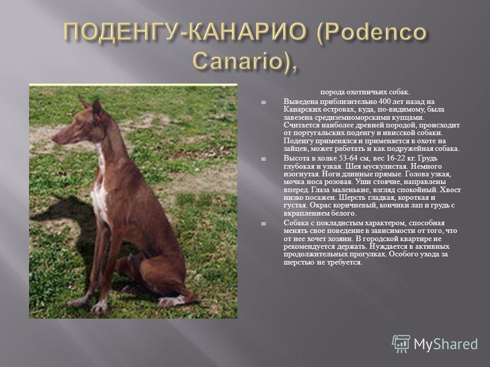 порода охотничьих собак. Выведена приблизительно 400 лет назад на Канарских островах, куда, по - видимому, была завезена средиземноморскими купцами. Считается наиболее древней породой, происходит от португальских поденгу и ивисской собаки. Поденгу пр