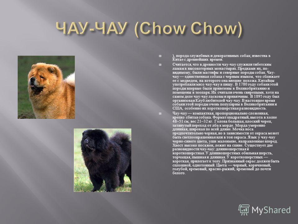 ), порода служебных и декоративных собак ; известна в Китае с древнейших времен. Считается, что в древности чау - чау служили тибетским ламам в высокогорных монастырях. Предками их, по - видимому, были мастифы и северные породы собак. Чау - чау единс