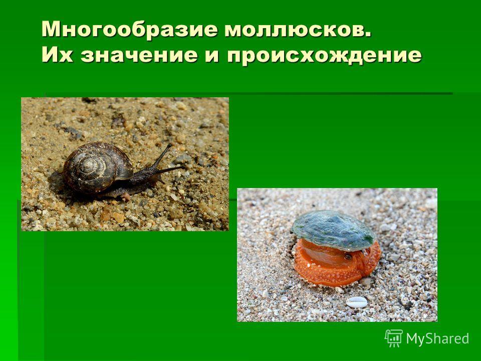 Многообразие моллюсков. Их значение и происхождение