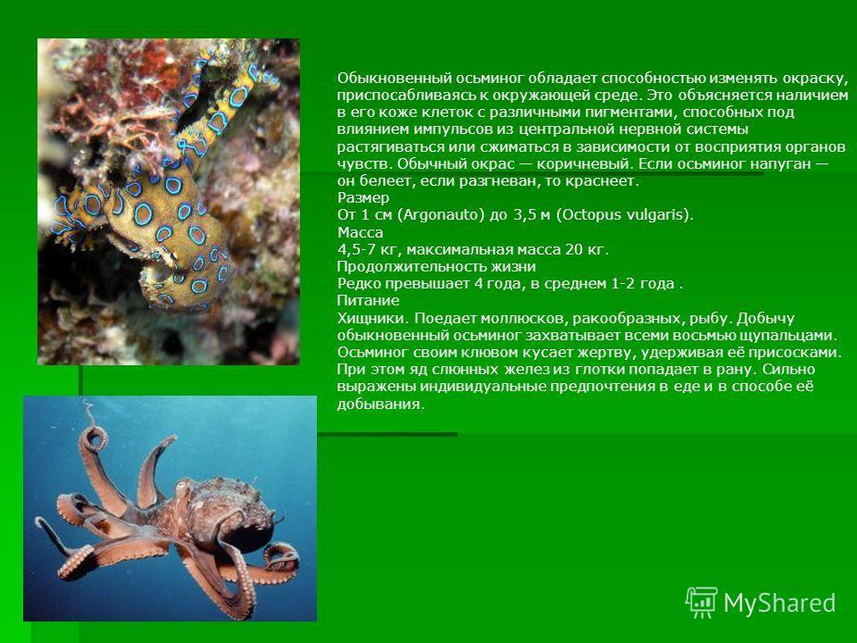 Обыкновенный осьминог обладает способностью изменять окраску, приспосабливаясь к окружающей среде. Это объясняется наличием в его коже клеток с различными пигментами, способных под влиянием импульсов из центральной нервной системы растягиваться или с