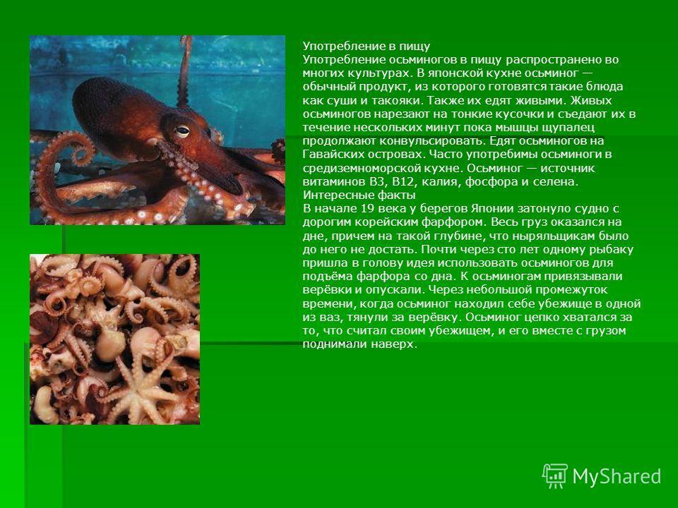 Употребление в пищу Употребление осьминогов в пищу распространено во многих культурах. В японской кухне осьминог обычный продукт, из которого готовятся такие блюда как суши и такояки. Также их едят живыми. Живых осьминогов нарезают на тонкие кусочки