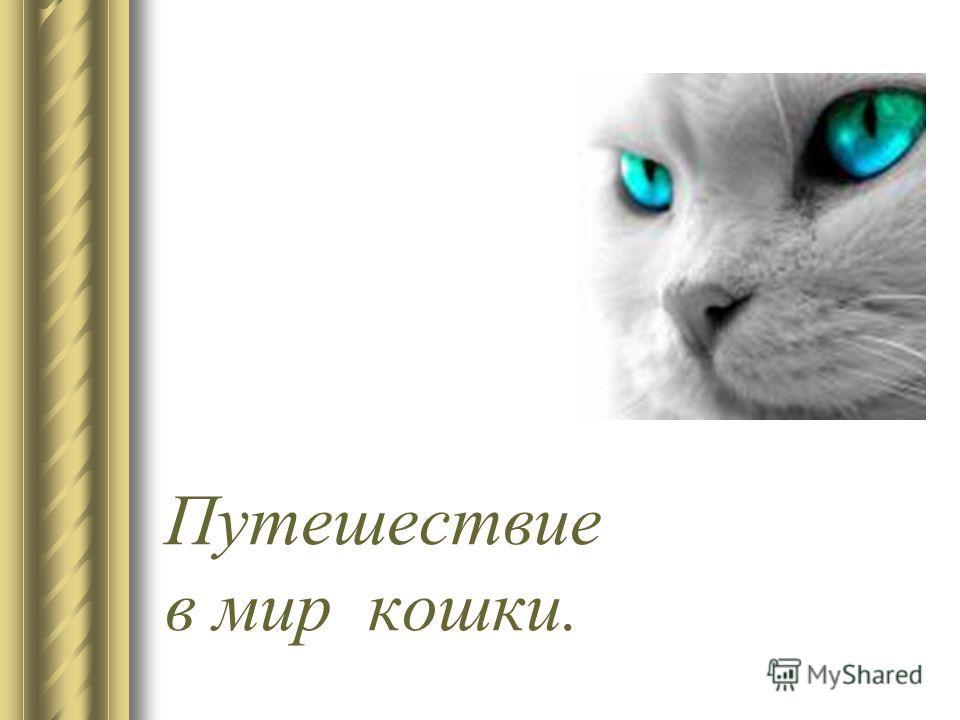 Путешествие в мир кошки.